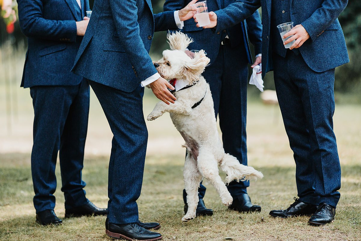 Browning Bros Wedding groomsmen with dog